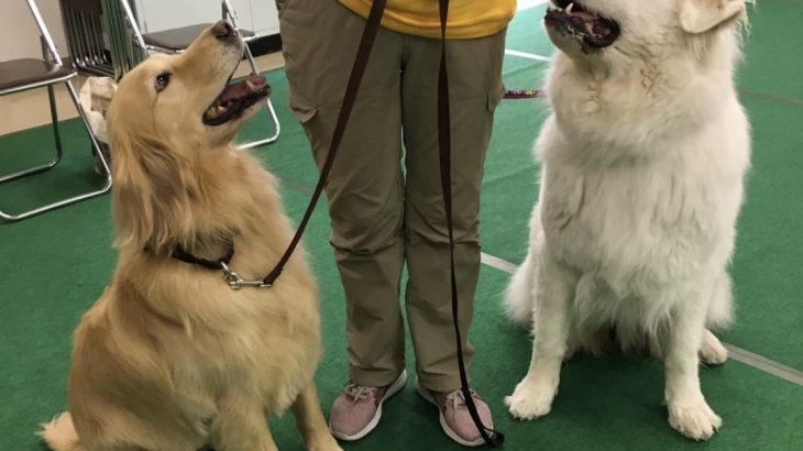 犬の飼い方講習会